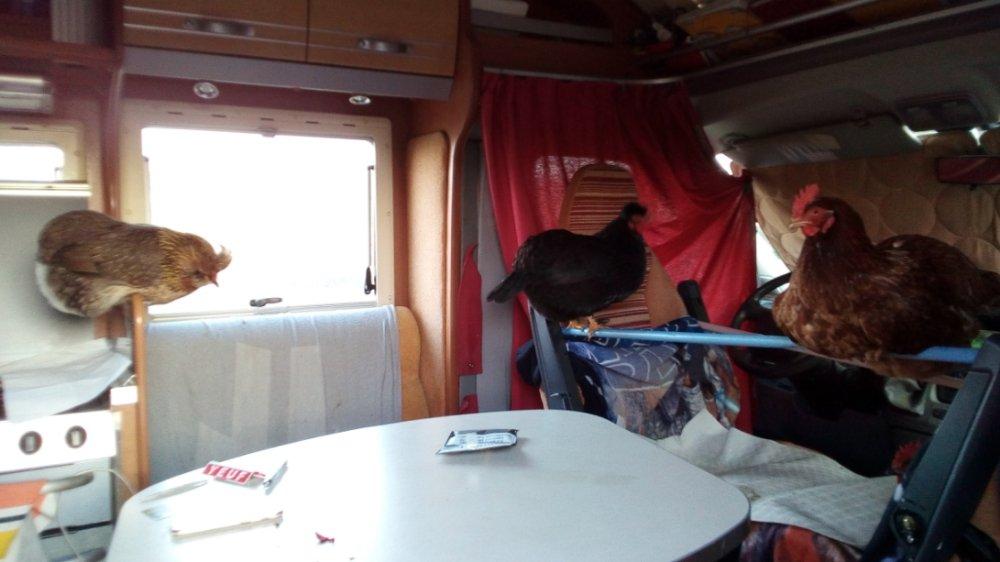 Aire camping-car à Amné (72540) - Photo 8